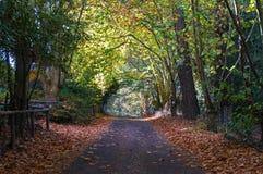 Strada campestre di autunno, strada privata nell'entroterra australiana Fotografie Stock