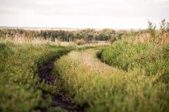 Strada campestre di estate nell'erba di geen immagini stock libere da diritti