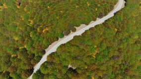 Strada campestre di vista aerea nella foresta di autunno archivi video