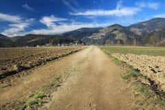 Strada campestre e campi di estate sui precedenti del bea blu immagini stock libere da diritti