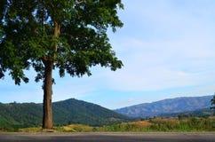 Strada campestre e grande albero solo Immagini Stock
