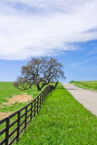 Strada campestre e quercia Fotografia Stock Libera da Diritti