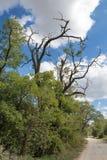 Strada campestre e un albero asciutto Fotografia Stock