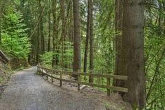 Strada campestre in foresta fotografia stock libera da diritti