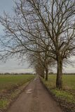 Strada campestre fra i campi verdi nella stagione invernale fotografie stock libere da diritti