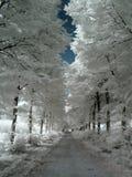 Strada campestre infrarossa Fotografia Stock