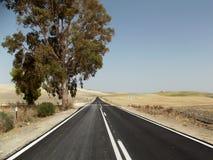 Strada campestre, Jerez, Andalusia, Spagna Fotografie Stock Libere da Diritti