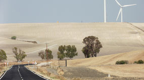 Strada campestre, Jerez, Andalusia, Spagna Immagine Stock