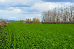 Strada campestre nel campo di autunno Cielo con le nuvole nel fondo Erba verde in prato ed alberi nudi lungo l'itinerario Immagine Stock