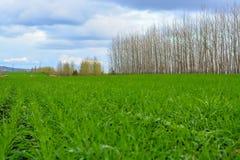 Strada campestre nel campo di autunno Cielo con le nuvole nel fondo Erba verde in prato ed alberi nudi lungo l'itinerario Fotografie Stock Libere da Diritti