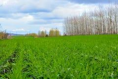 Strada campestre nel giacimento di primavera Cielo con le nuvole nel fondo Erba verde in prato ed alberi nudi lungo l'itinerario Fotografia Stock Libera da Diritti