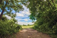 Strada campestre vicino agli alberi verdi in un giorno soleggiato fotografia stock libera da diritti