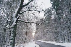 strada cementata in bello nevoso immagine stock
