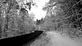 Strada che conduce attraverso la foresta densa nevosa immagine stock