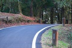 Strada che si dirige alla foresta Fotografie Stock Libere da Diritti