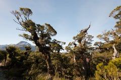 Strada chiave della traccia della sommità a Milford Sound Nuova Zelanda Fotografia Stock Libera da Diritti