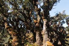Strada chiave della traccia della sommità a Milford Sound Nuova Zelanda Fotografia Stock
