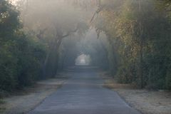 Strada chiusa dagli alberi Immagine Stock Libera da Diritti