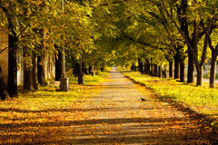 Strada con gli alberi Fotografie Stock