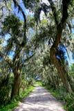 Strada con gli alberi che si sporgono con il muschio spagnolo in U.S.A. del sud fotografie stock