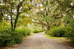 Strada con gli alberi che si sporgono con il muschio spagnolo in U.S.A. del sud fotografia stock libera da diritti
