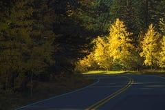 Strada con gli alberi di colore giallo di caduta Fotografia Stock