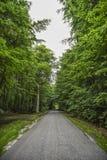Strada con gli alberi verdi, ora legale Immagine Stock Libera da Diritti