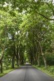 Strada con gli alberi verdi, ora legale Fotografie Stock