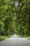 Strada con gli alberi verdi, ora legale Immagine Stock
