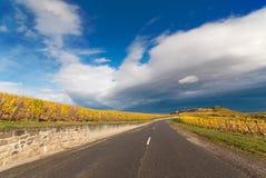Strada con il bello paesaggio della vigna Immagini Stock