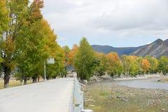 Strada con l'albero in autunno Fotografia Stock