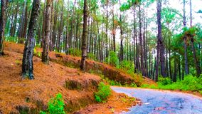 Strada con la strada rurale degli alberi verdi immagine stock libera da diritti