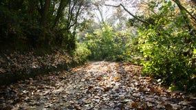 Strada con le foglie in una foresta del parco naturale Collserola Fotografia Stock Libera da Diritti