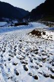 Strada con neve Immagini Stock