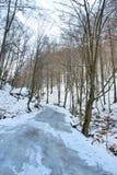 Strada congelata di inverno della foresta. Fotografie Stock