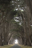 Strada coperta da un baldacchino degli alberi. Immagine Stock Libera da Diritti