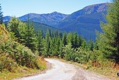 Strada curva del guardia forestale Fotografia Stock Libera da Diritti