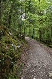 Strada curva della ghiaia della foresta in foresta fotografia stock