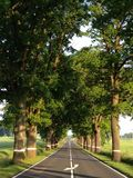 Strada degli alberi Immagini Stock Libere da Diritti