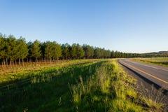 Strada degli alberi di silvicoltura Fotografia Stock Libera da Diritti