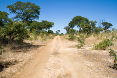 Strada dei cacciatori vicino alla sosta nazionale di Hwange Fotografia Stock Libera da Diritti