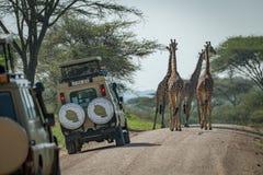 Strada del blocchetto della giraffa di quattro masai alle jeep Fotografia Stock