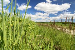 Strada del campo fra i prati ed i campi fotografia stock