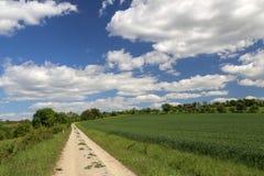 Strada del campo fra i prati ed i campi fotografia stock libera da diritti