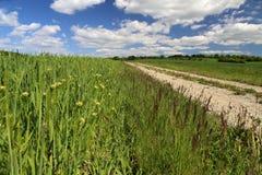 Strada del campo fra i prati ed i campi immagini stock libere da diritti