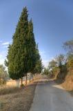Strada del Cypress Fotografia Stock Libera da Diritti