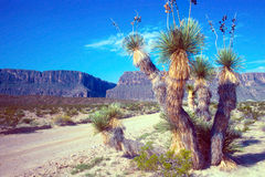 Strada del deserto al Rio Grande Immagini Stock
