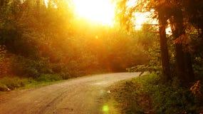 Strada del fatato della foresta di tramonto Fotografie Stock