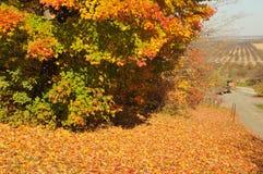 Strada del frutteto dell'oro Fotografie Stock