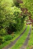 Strada del giardino fotografie stock libere da diritti